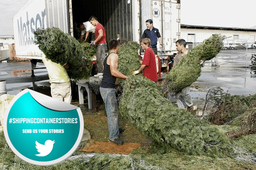 Christmas Tree Filled Shipping Containers Infested with Slugs